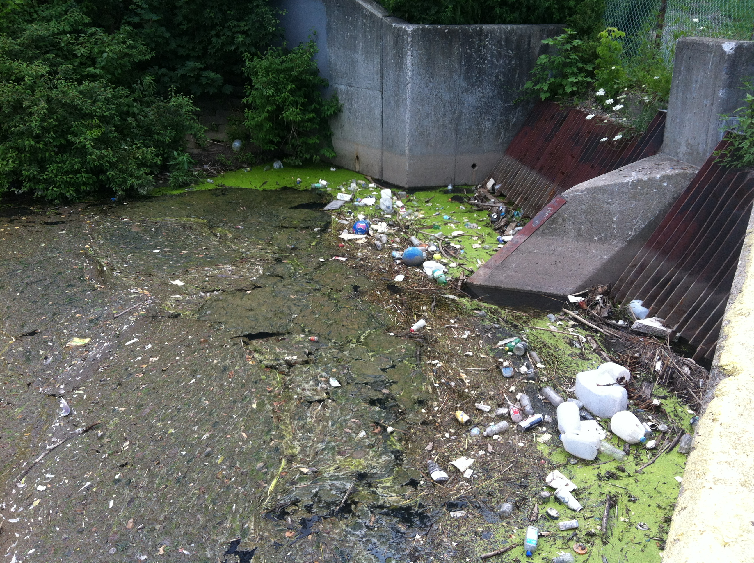 City Hall ignoring Scajaquada Creek eyesore