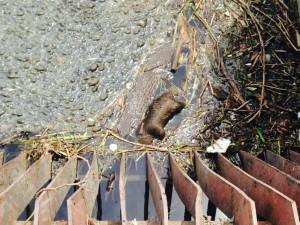 Scajaquada Creek Sewer Overflows